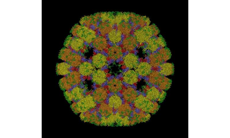 Geometry goes viral: Researchers use maths to solve virus puzzle