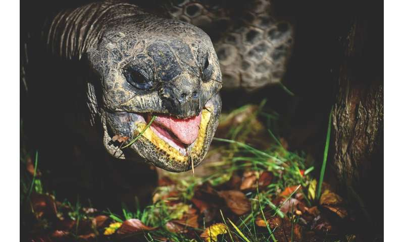 Giant tortoises found to be trainable and to have long memories