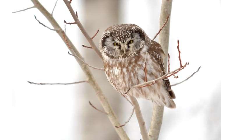 Google searches reveal popular bird species