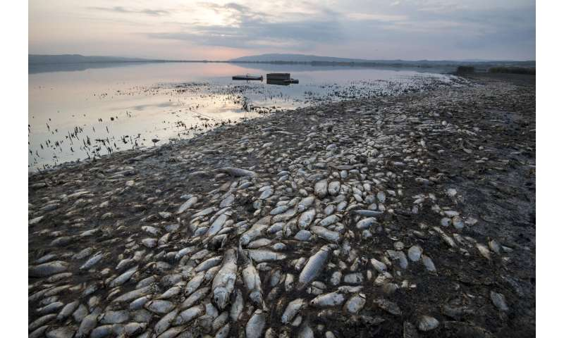 Greece: Oxygen-starved fish dying in drought-hit lake