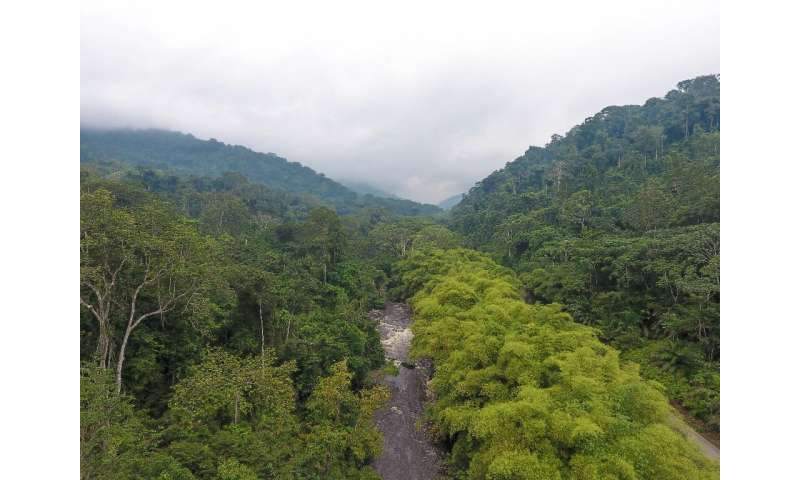 Green Gabon: The small Central African country is a rare jewel—90 percent of its area is covered by forest
