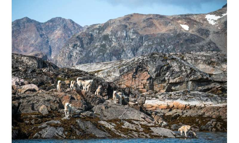 Greenlanders prize the island's famous dogs for their endurance, using them to pull their sleds to hunt seals, whales and polar
