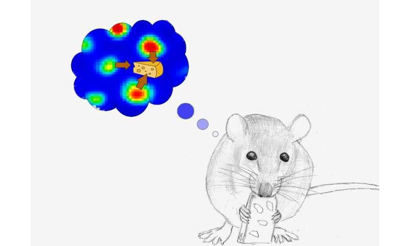 Grid cells create 'treasure map' in rat brain