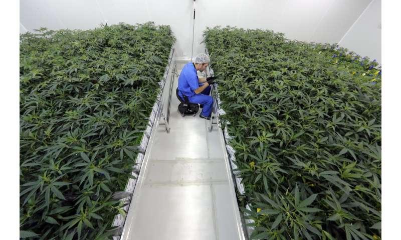Grower: 5,000 in Louisiana medical marijuana program so far