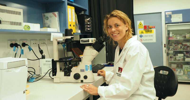 Growing tumours on brain-like tissue for better therapies