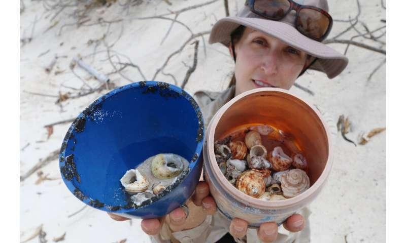 Half-million crabs killed by plastic debris on remote islands