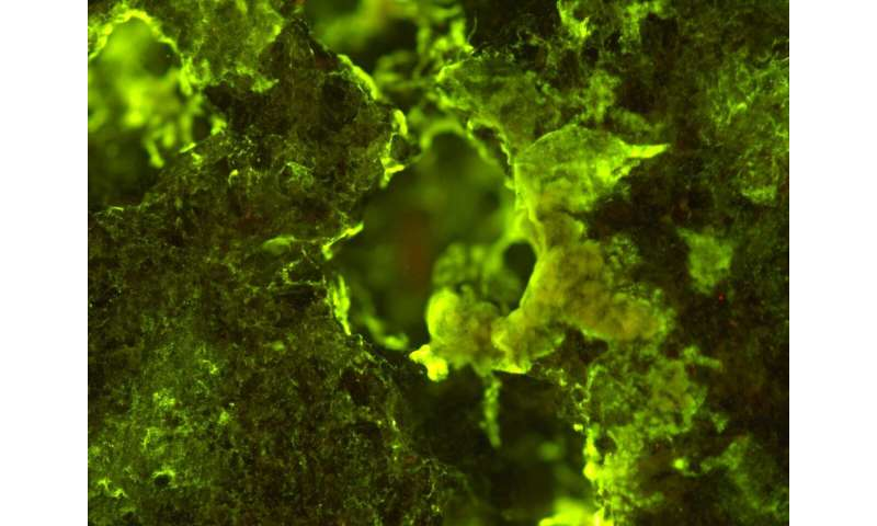 Harnessing the power of microbes for mining in space