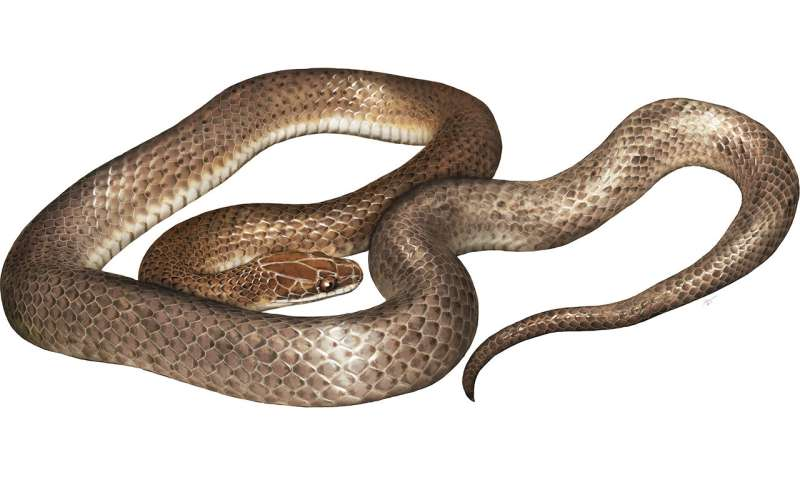 Herpetologists describe new species of snake found in