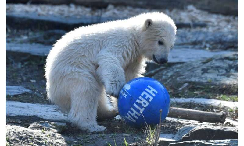 Hertha was born on December 1 in the city's Tierpark zoo and is the heir to late lamented superstar Knut