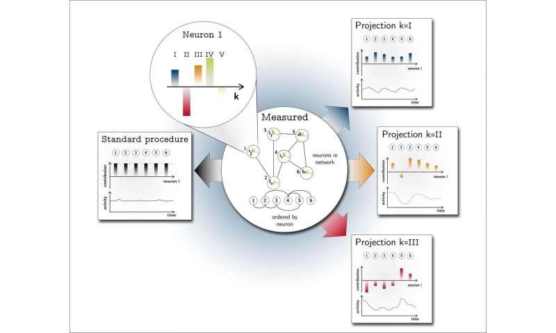 Hidden dynamics detected in neuronal networks