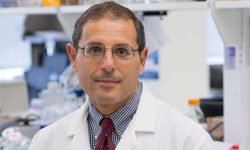 High-fat diet in utero protects against Alzheimer's later, Temple team shows in mice