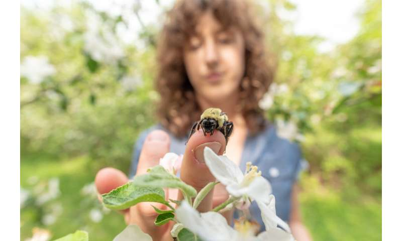 Honeybees infect wild bumblebees -- through shared flowers