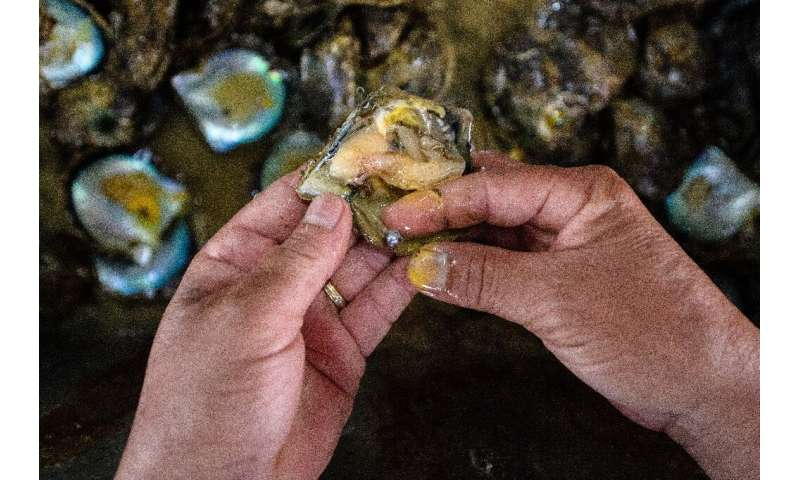 Hong Kong remains the world's largest importer and exporter of pearls, but overfishing and market forces have decimated the loca