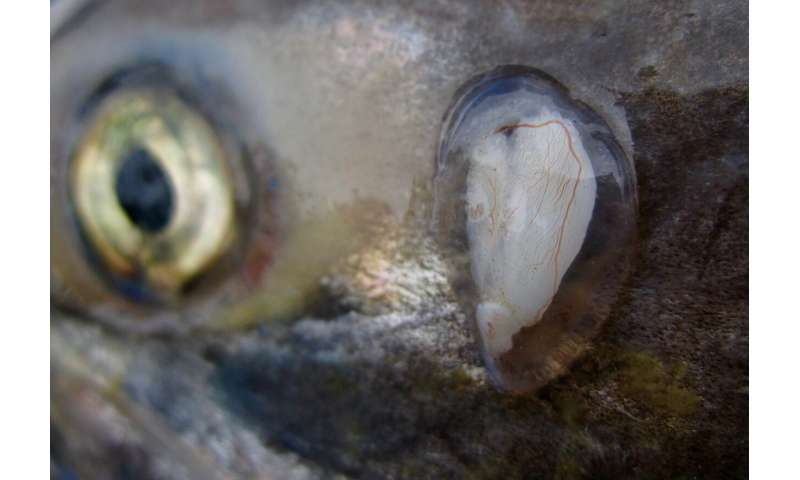 Hot spots in rivers that nurture salmon 'flicker on and off' in Bristol Bay region