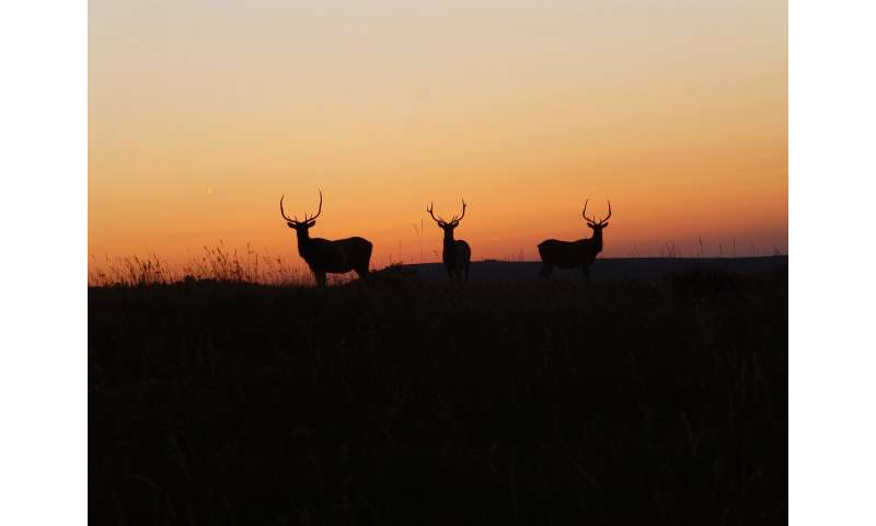 Household bleach inactivates chronic wasting disease prions