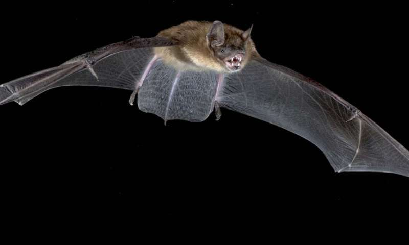 How bats relocate in response to tree loss