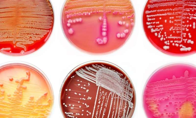 How can evolutionary biology help to get rid of antibiotic resistant bacteria?