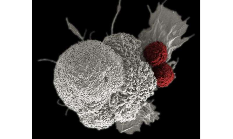 How gene-edited white blood cells are helping fight cancer