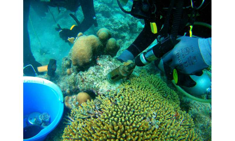 How sponges undermine coral reefs from within
