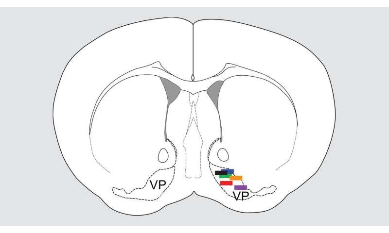 How the brain balances pleasure and pain