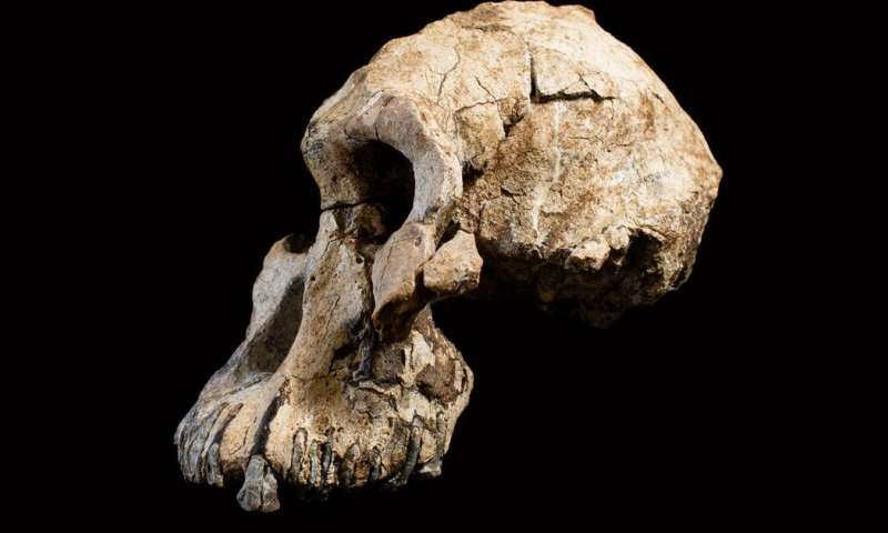 How the skull of humanity's oldest known ancestor is changing our understanding of evolution