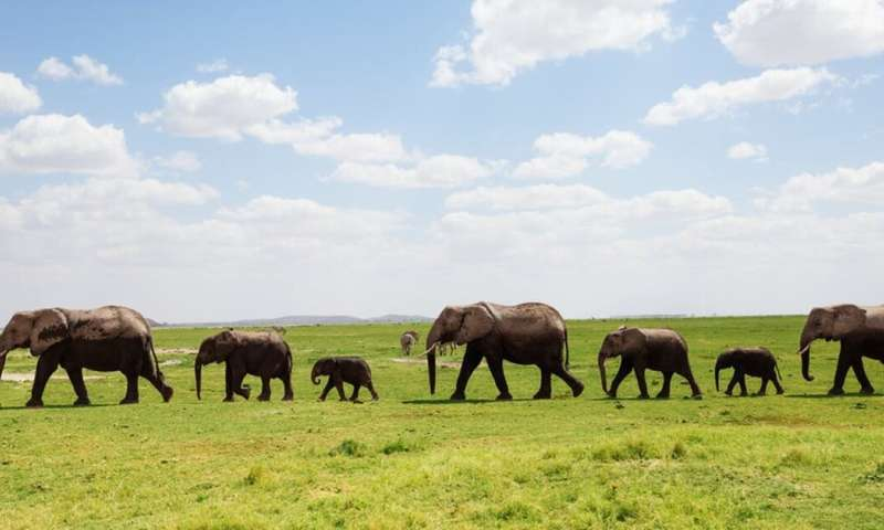 How the social lives of animals should form part of our conservation culture