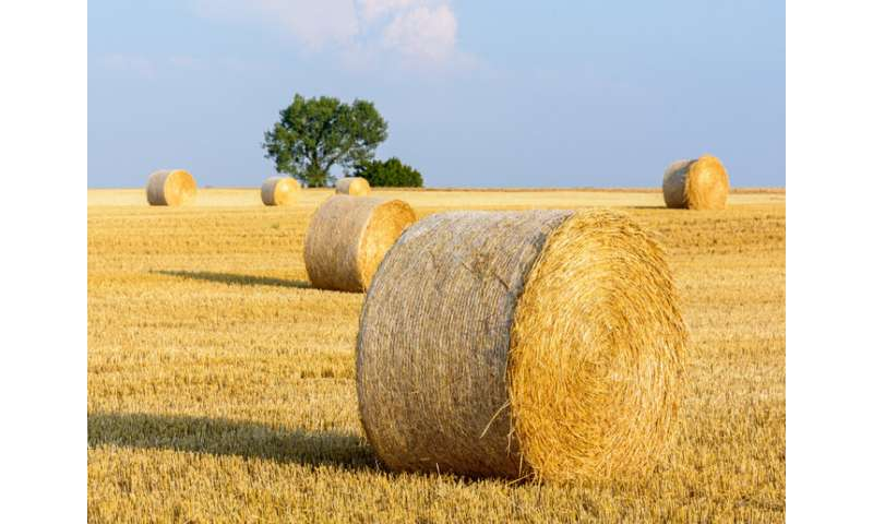 How to convert wheat straw waste into green chemicals