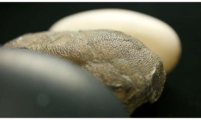 **Hue times two: a second look at the color of dinosaur eggs