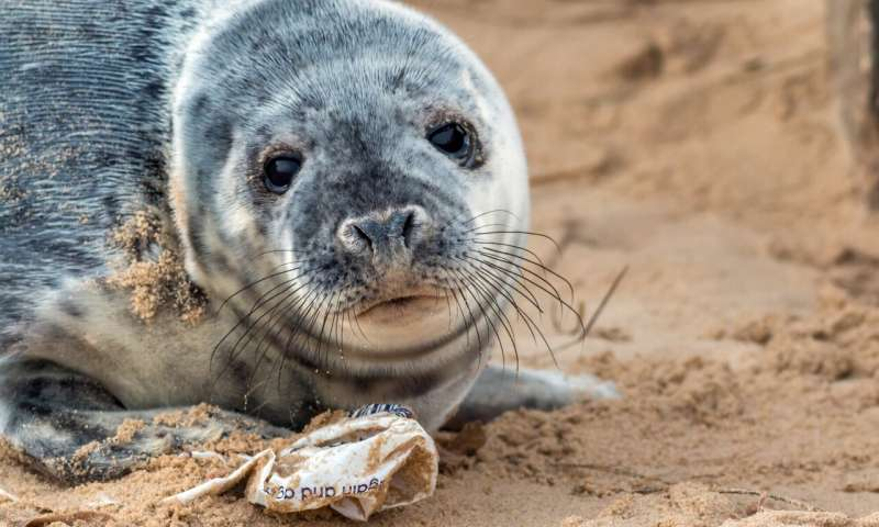 Hugh, me and everybody – Join the war on plastic pollution