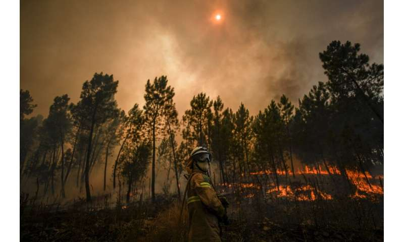 Hundreds of firefighters were deployed to fight the blazes in the heavily forested Castelo Branco region