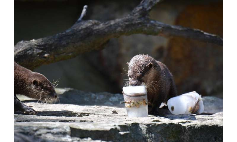 Hunters and fishermen are killing the adults and snatching the baby otters to meet the growing demand
