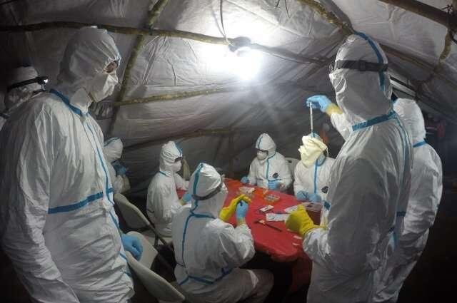 Hunting Ebola's origins