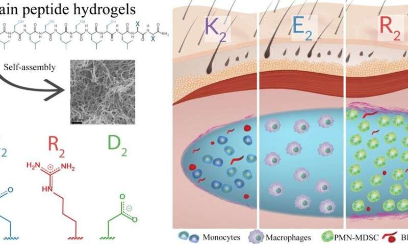 Hydrogels control inflammation to help healing