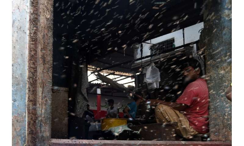 Illnesses are on the rise in Karachi because of flies and mosquitoes, according to a health activist
