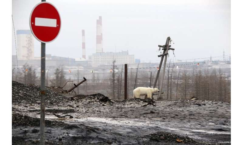 Images of the visibly exhausted animal roaming the Norilsk area in search of food have gone viral