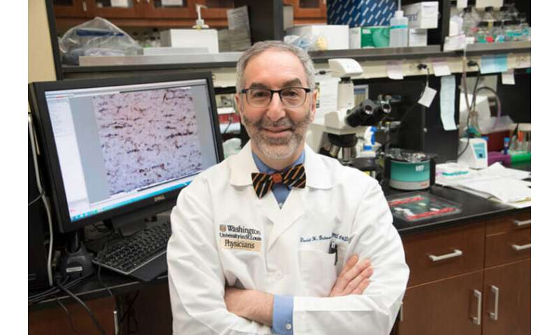 Immune cells determine how fast certain tumorsgrow