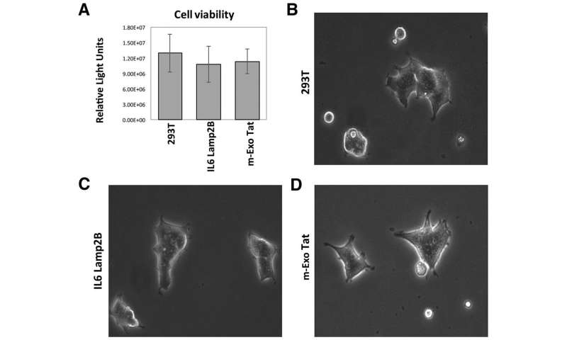 Impact of exosomal HIV-1 Tat expression on the human cellular proteome