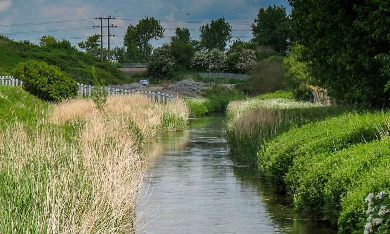 Improved sewage treatment has increased biodiversity over past 30 years