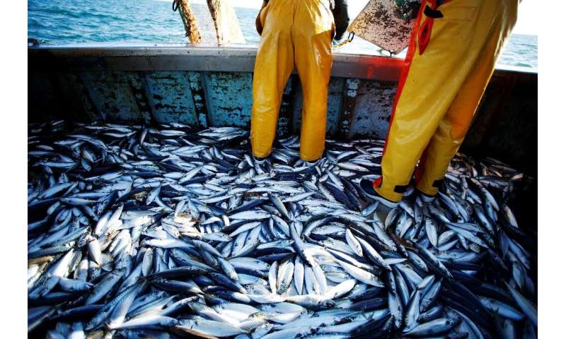 In 2017, global catches topped 92 billion tonnes, more than four times the amount fished in 1950, according to the United Nation