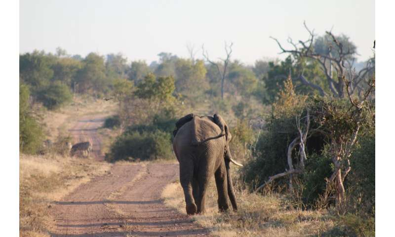 Increasing value of ivory poses major threat to elephant populations