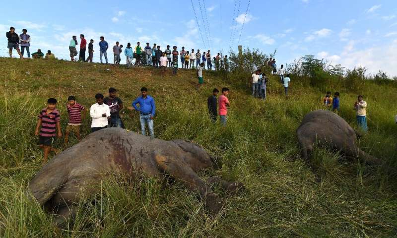 Indian villagers look at the bodies of two  elephants killed after being struck by a train in 2017