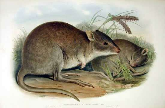 Indigenous hunters have positive impacts on food webs in desert Australia