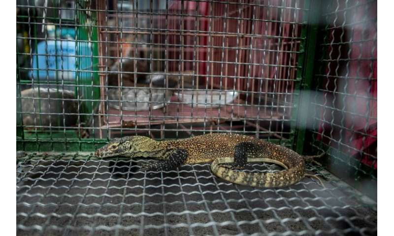 Indonesia, home to the komodo dragon, has for years been a key source and transit point for animal trafficking