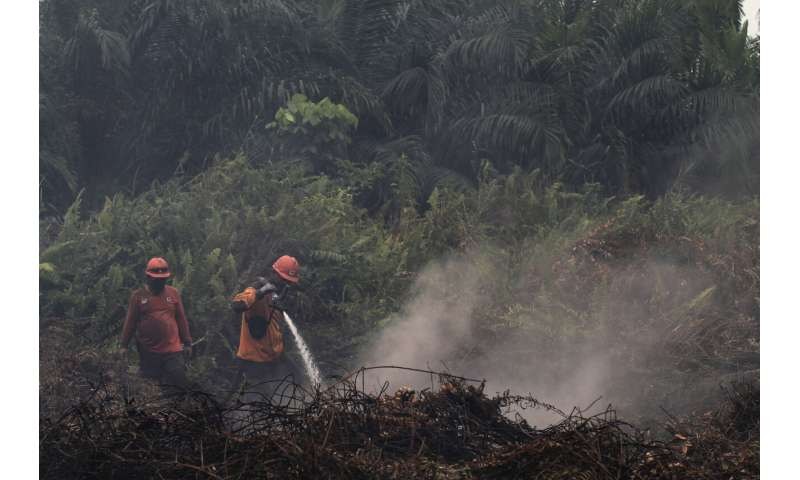Indonesia seals off 30 companies over forest fires