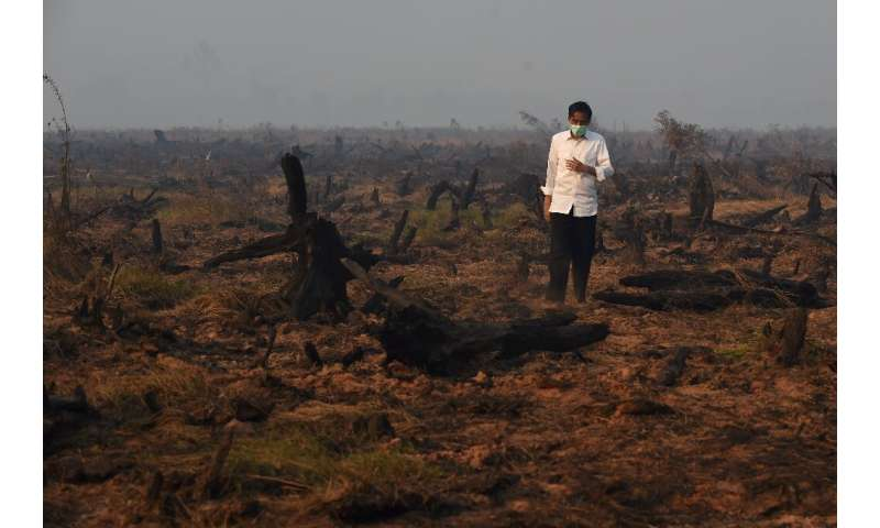 Indonesia's President Joko Widodo inspects a peatland clearing that was engulfed by fire in 2015