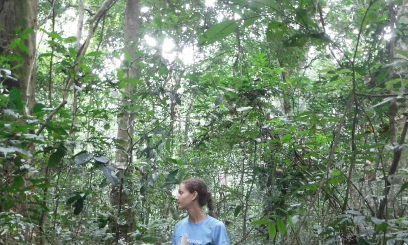 In hunted rainforests, termites lose their dominance