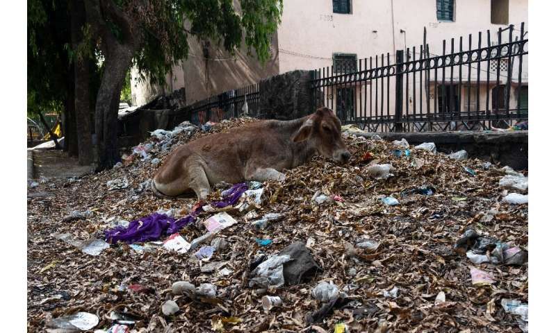 In India, plastic pollution is causing widespread harm to the environment