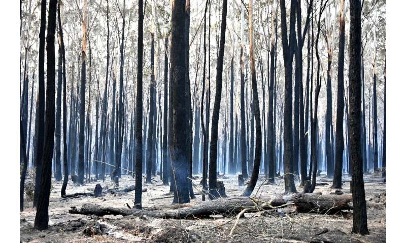 In Old Bar, hectares of bushland had turned charcoal and small pockets of flames continued to smoulder