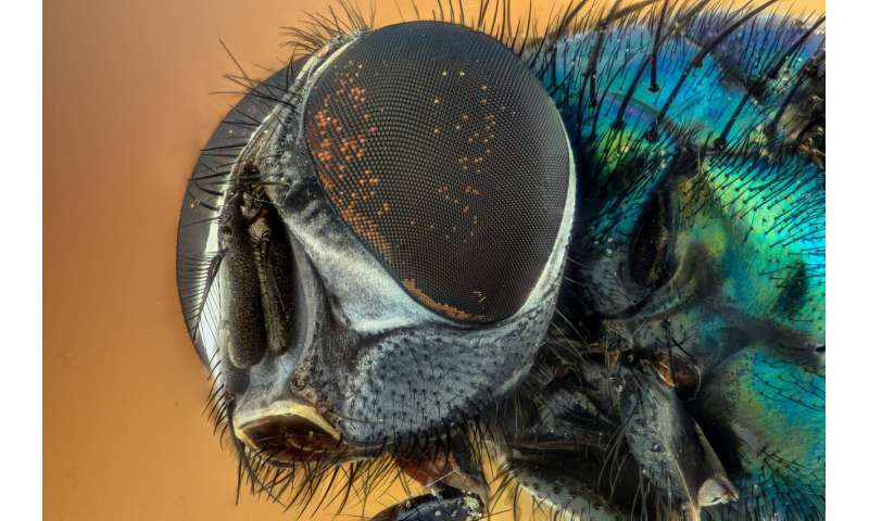 New insect database to help with forensic investigations