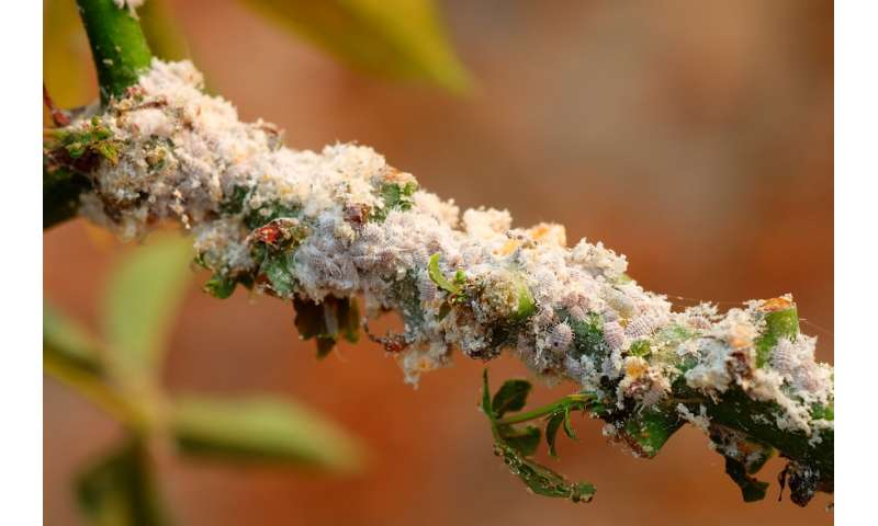 Insect biological control shields tropical forests